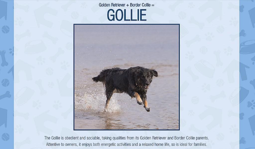 Gollie - Crossbreed Generator