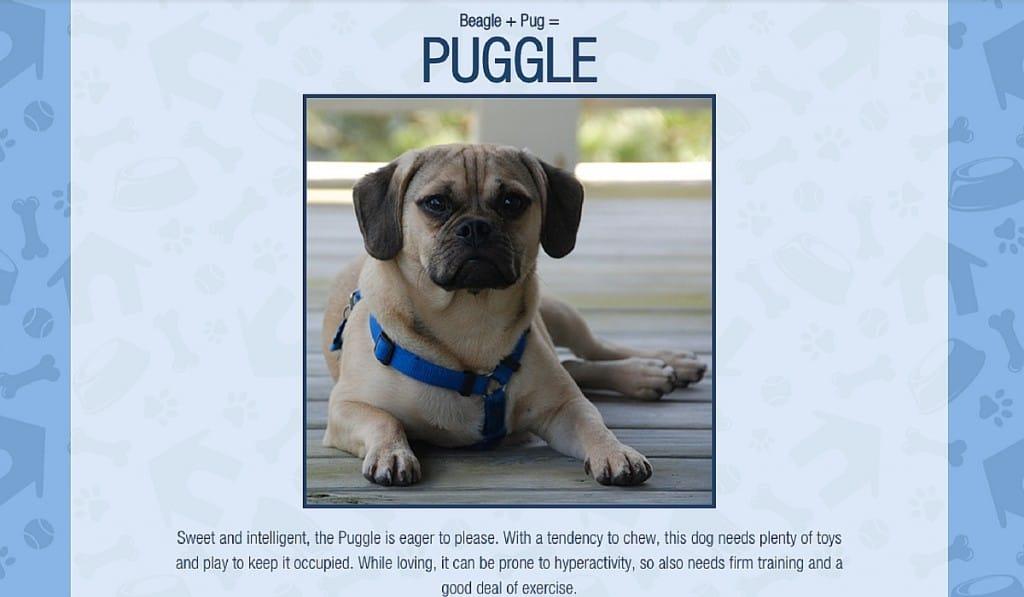 Puggle - Crossbreed Generator