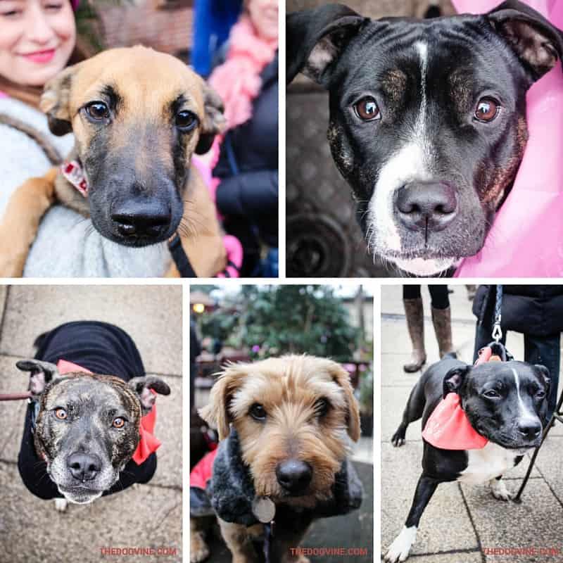Ex ADM Dogs Part 2 - All Dogs Matter Valentines Walk Part 2
