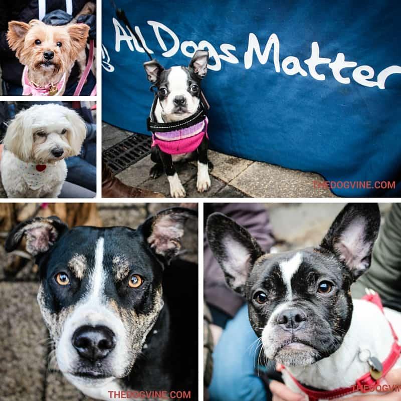 Ex ADM Dogs Part 1 - All Dogs Matter Valentines Day Dog Walk 2016