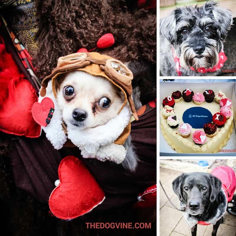 All Dogs Matter Valentines Day Dog Walk 2016