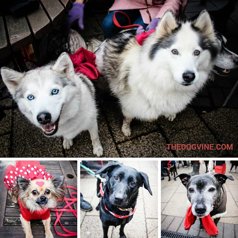 Dressing to Impress - All Dogs Matter Valentines Walk 2016