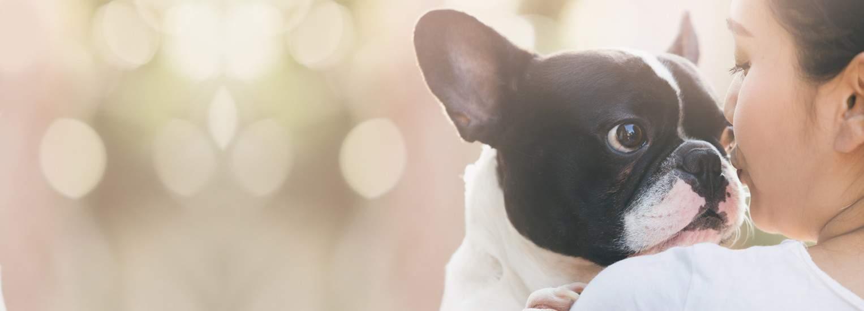 Canine & Companions Exhibition - Cuffleberry & Co