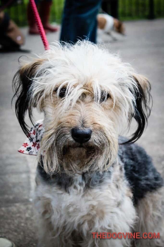 Charli - Dog Factor 2016