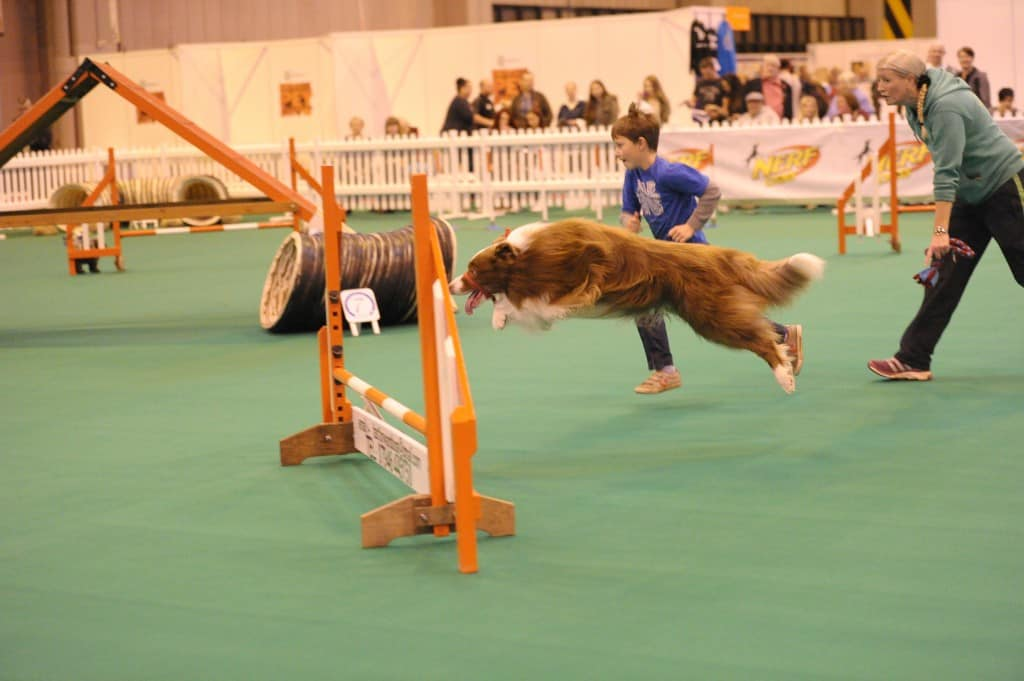 National Pet Show London 2016 - Agility