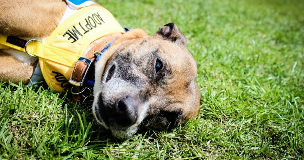What's On – The Latest London Dog Events For Spring