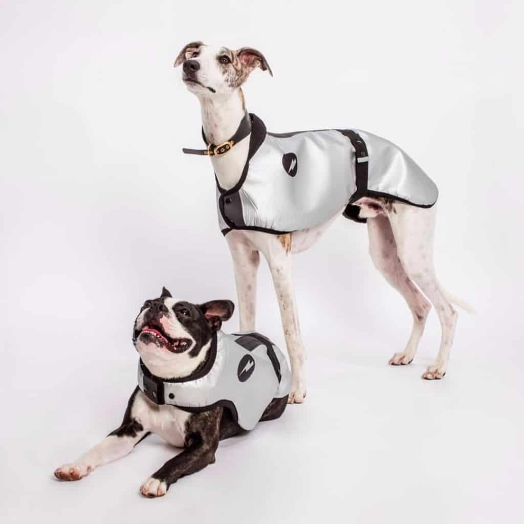 National Pet Show - DogSnug
