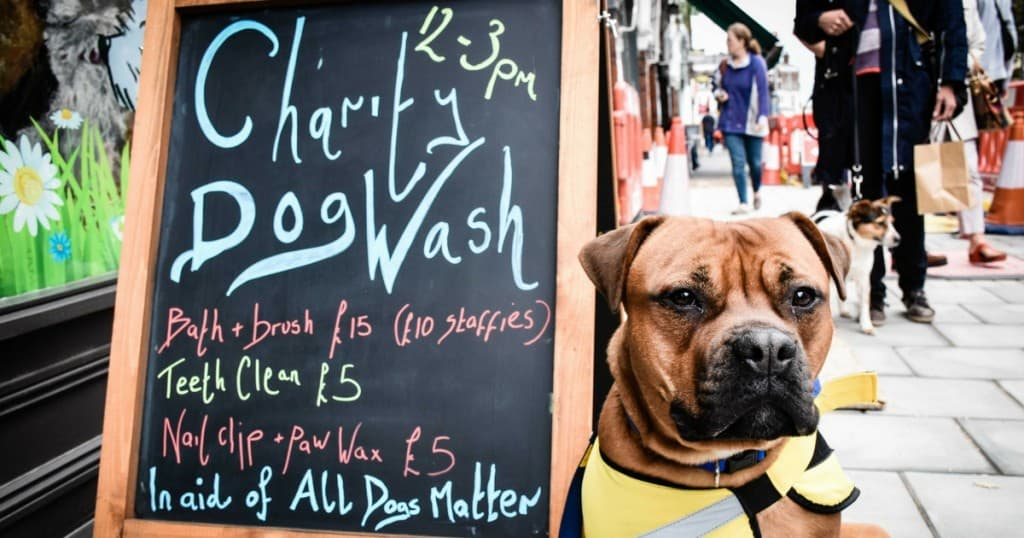 How A Muswell Hill Dog Boutique Is Helping A London Dog Rescue