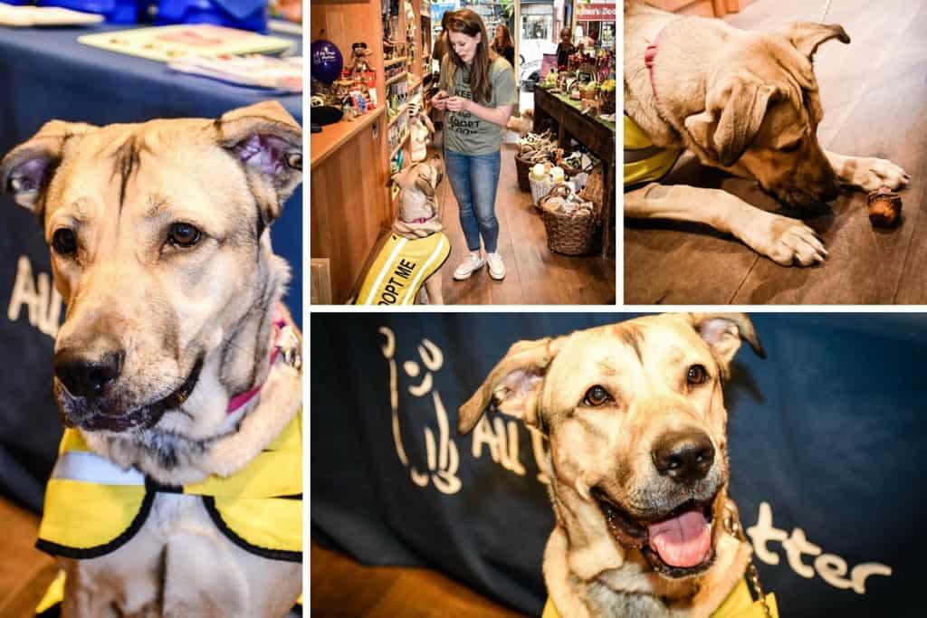 Monique - London Dog Rescue