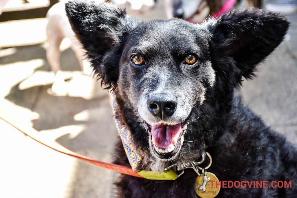 Belinha - Pup Idol 2016