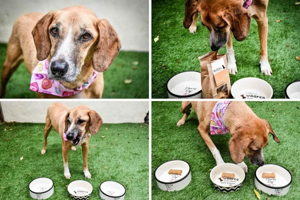 Nina - Wellybix Dog Biscuits