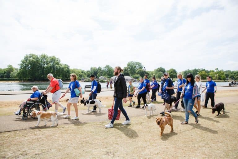 Dog Walk For The Mayhew Animal Home