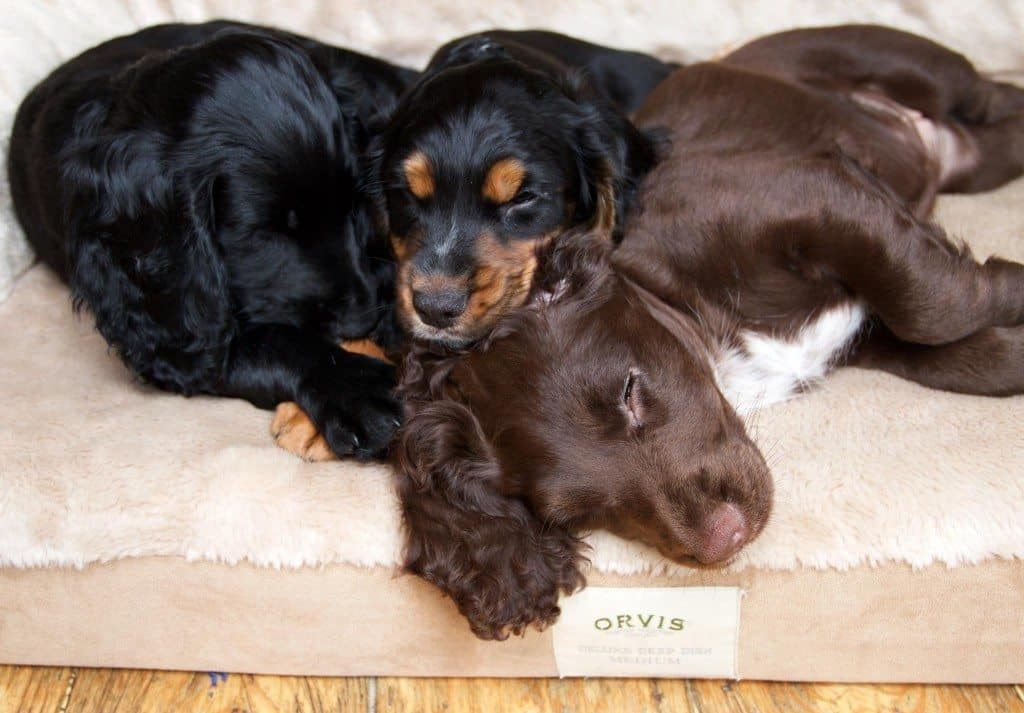 Orvis Dog Festival London - September Dog Events