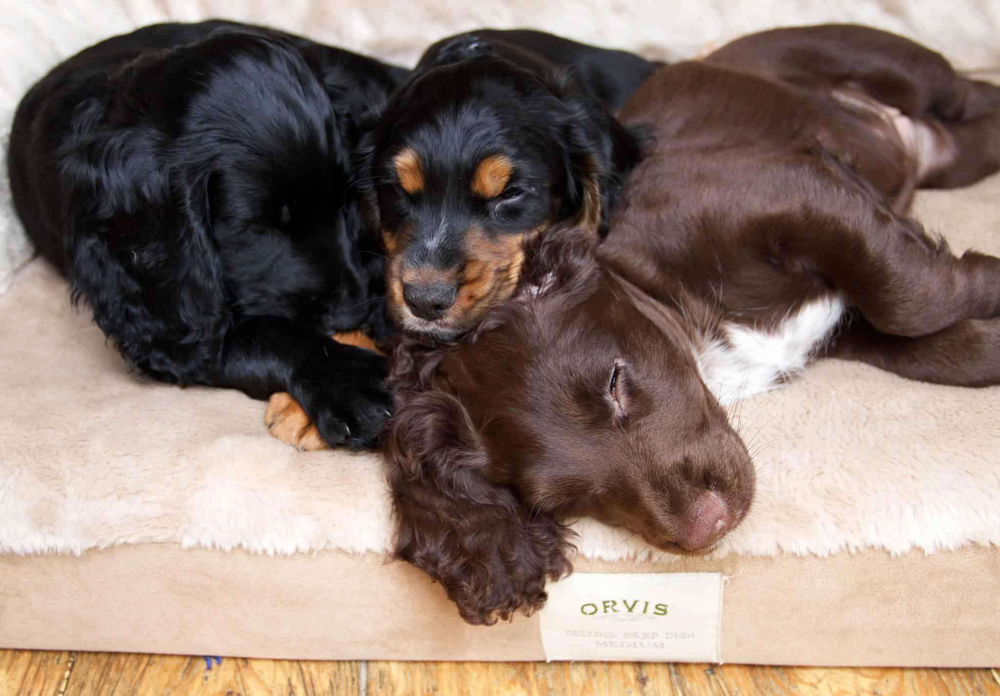 Orvis Dog Festival London