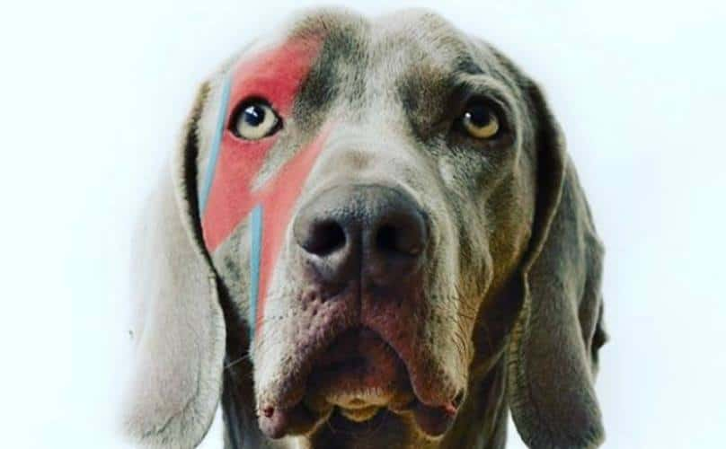 Visions Festival Bowie Dog