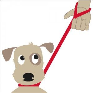 Doddle For Dogs collar-diagram21-300x300