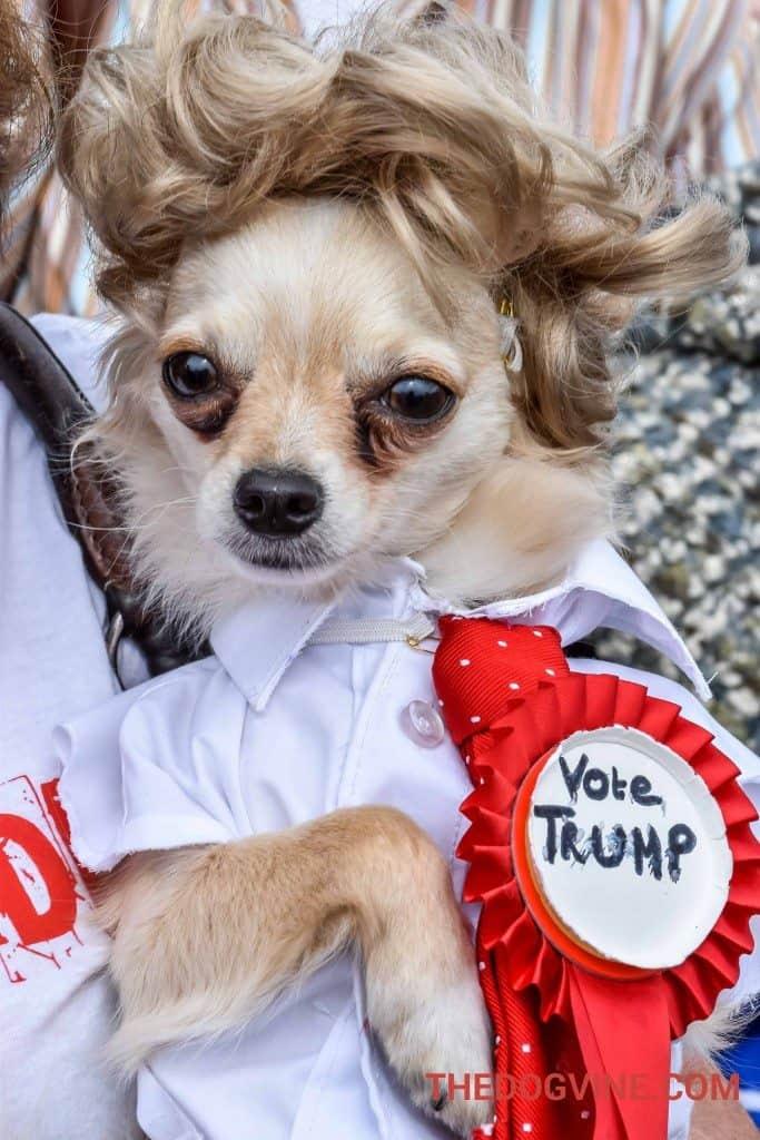Pup Aid - Donald Trump