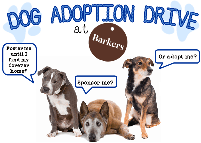 all-dogs-matter-dog-adoption-drive-at-barkers