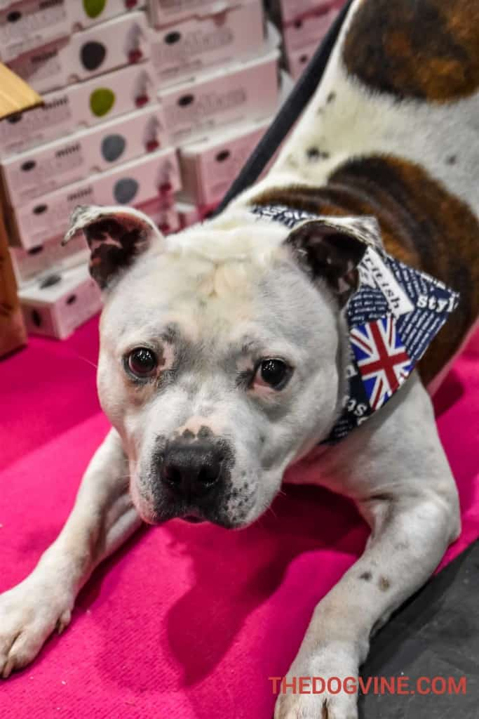 Discover Dogs 2016 - Louis