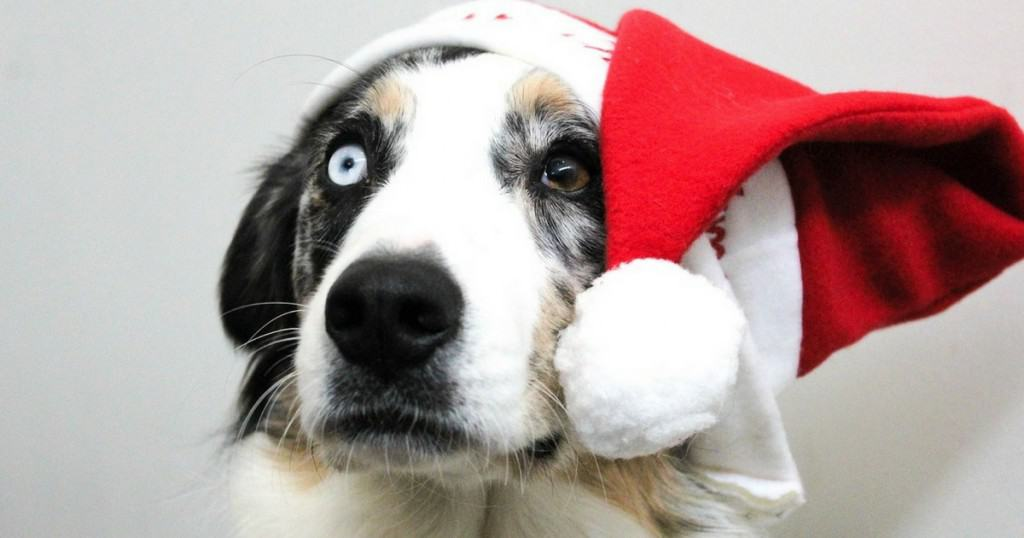 Christmas | 13 Amazing Brands That Give Back to Dogs