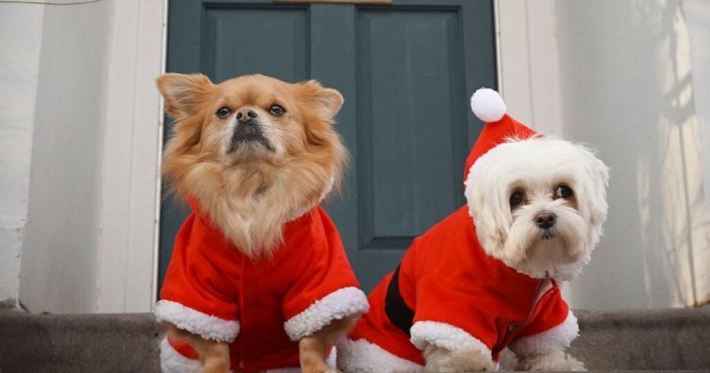 30 Cute Christmas Dogs To Get You In The Festive Spirit
