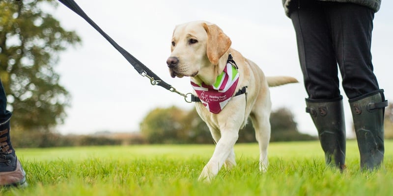 London Dog Events 2017 - the-great-british-dog-walk-2017