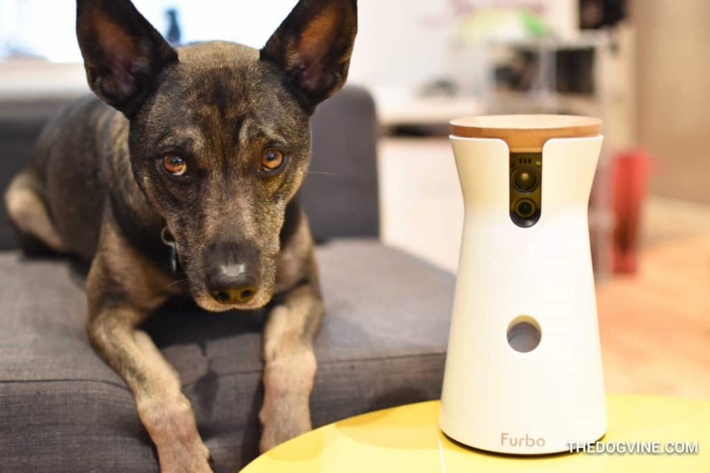 Furbo Dog Camera And Your Dog