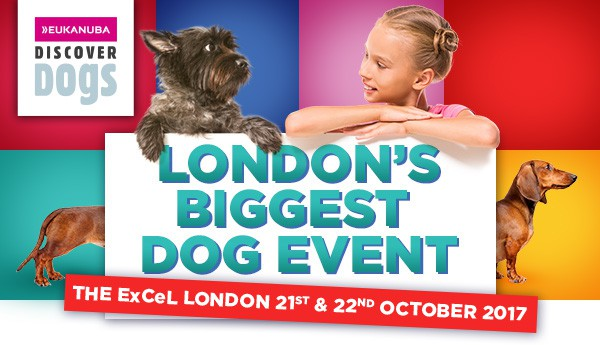 kc-discoverdogs17-header