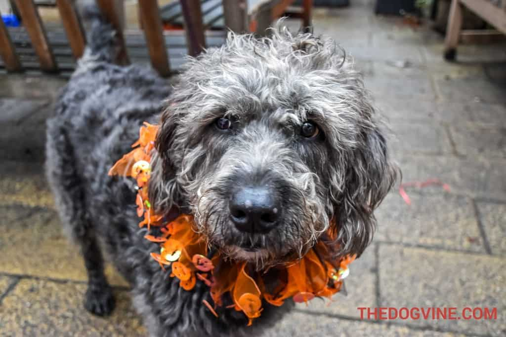 All Dogs Matter Valentines Walk-21