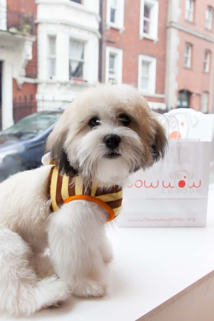Amanda Holden Dog Buddy Bow Wow London Dog Grooming Launch