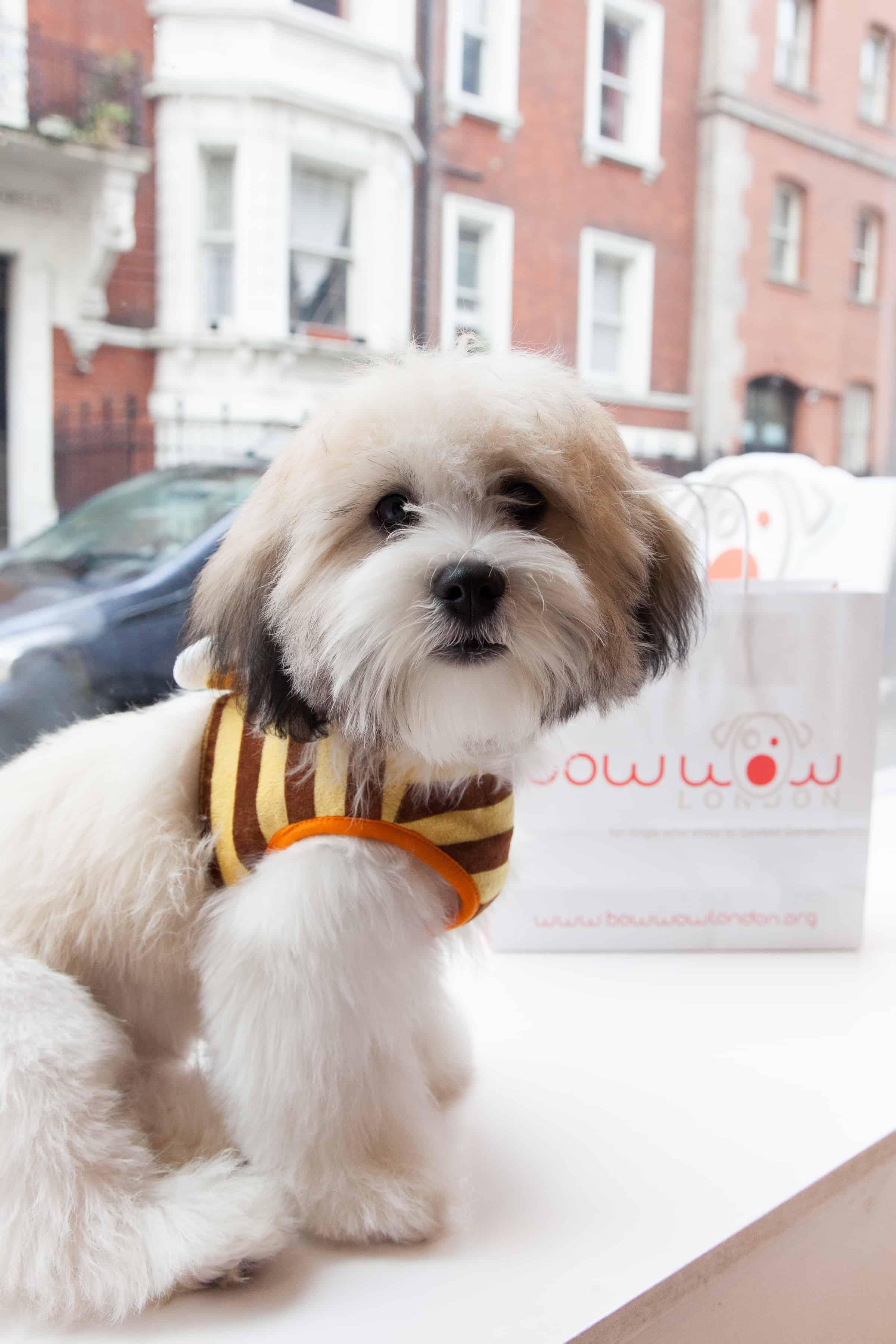 Celebrity Styling Dog Groomers - voofla.com