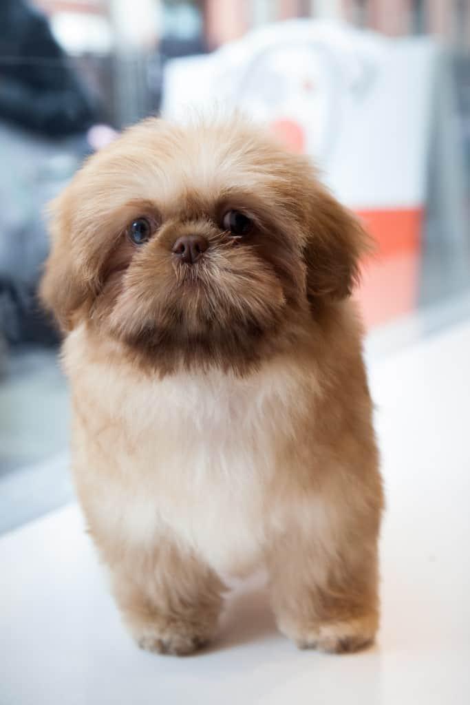 Maria Friedman Dog Bingy Bow Wow London Dog Grooming Launch