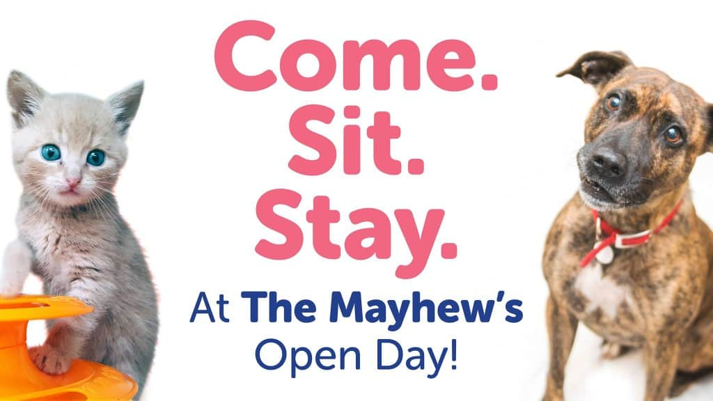 The Mayhew Open Day 2017