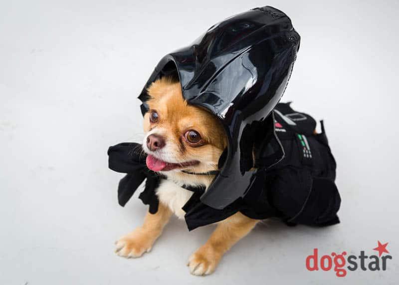 Sci-Fido dogstar-scifilondon-20130505-8615