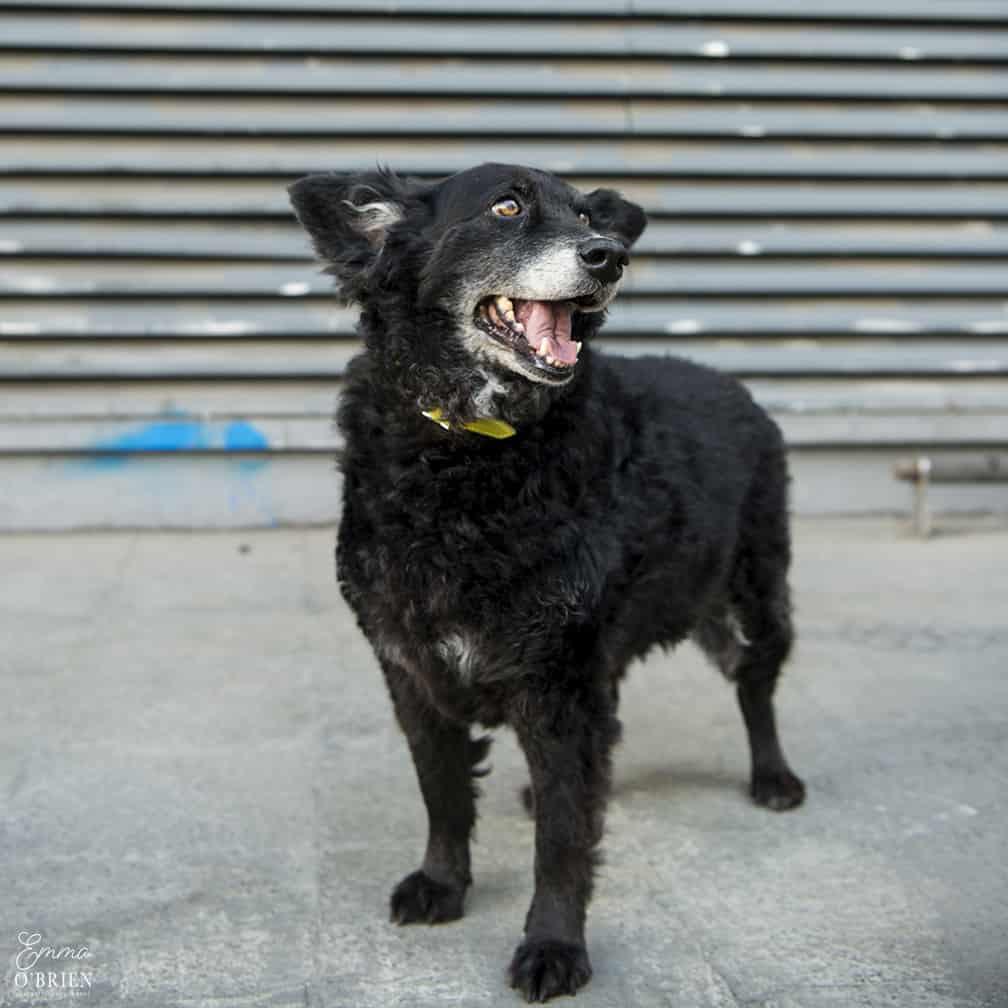 Belinha London Dog Photo Shoot with Emma OBrien_0028
