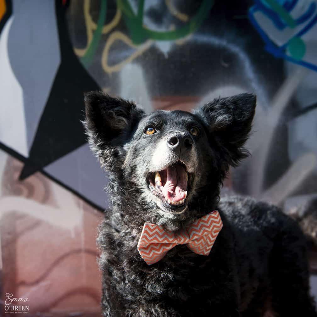 Belinha London Dog Photo Shoot with Emma OBrien_0089