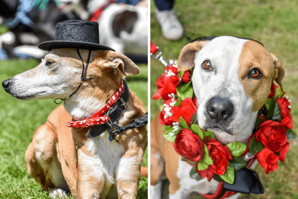 Best Dressed - Great Hampstead Bark Off 2017