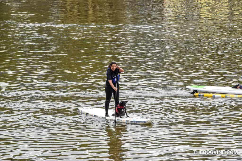 Dog and Human Paddle Boarding 00001