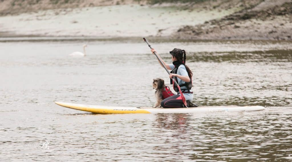 Dog and Human Paddle Boarding 00022