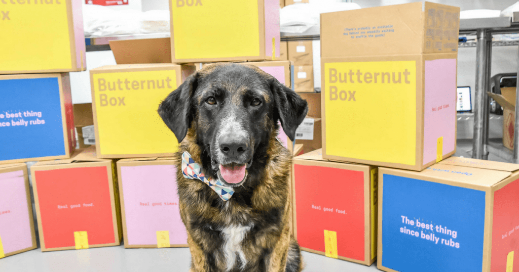 What Did Ned From All Dogs Matter Think Of Butternut Box?