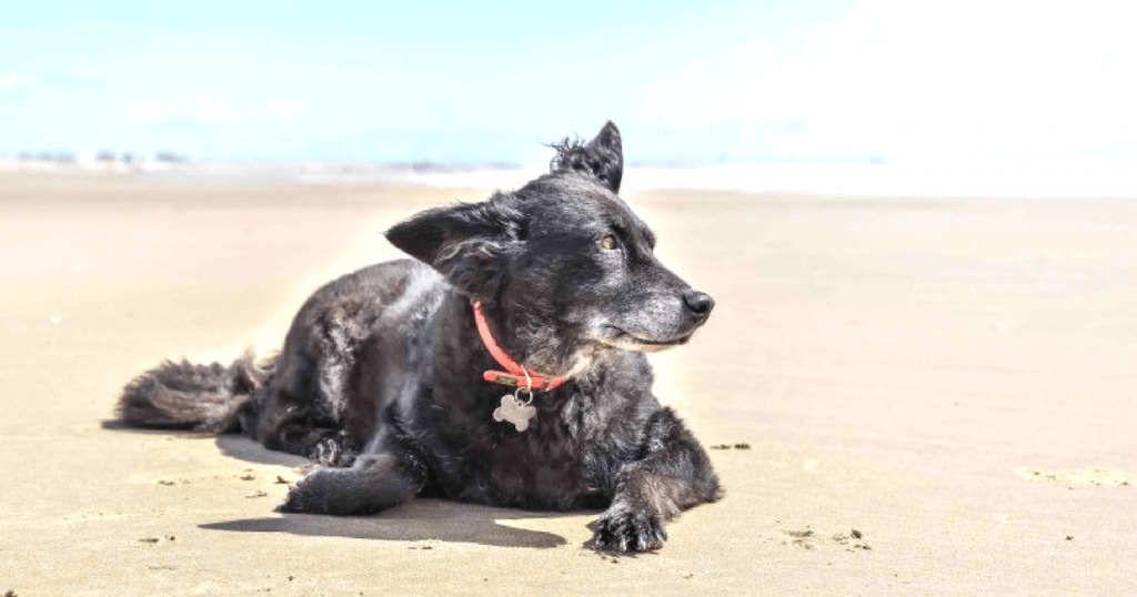 A Dogs Day Out At Camber Sands