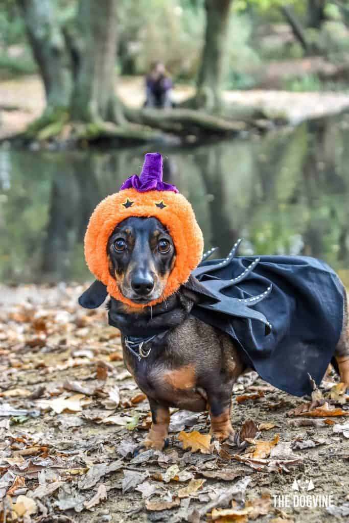 All Dogs Matter Halloween Walk and Show 2017 172