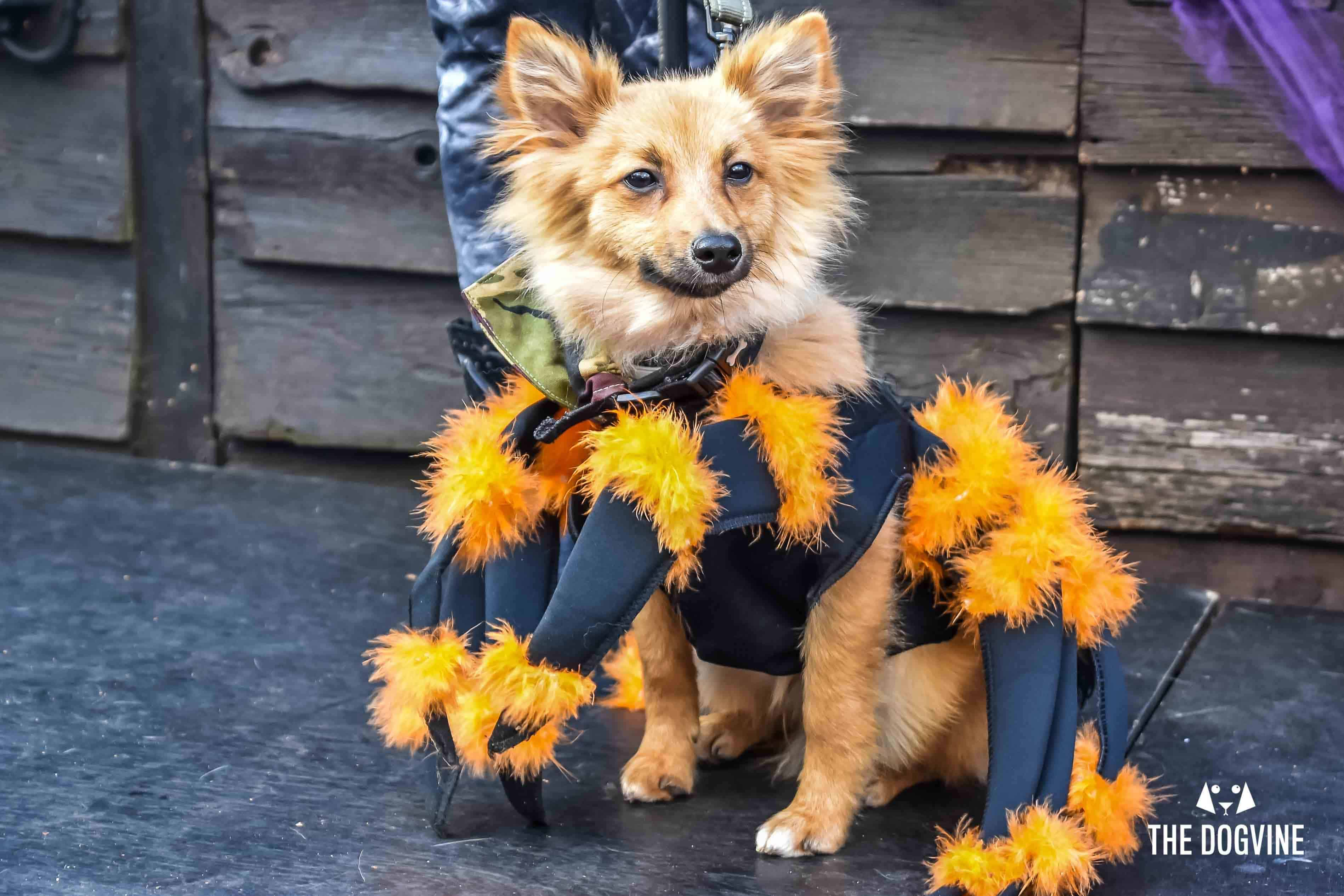 All Dogs Matter Halloween Walk and Show 2017 46