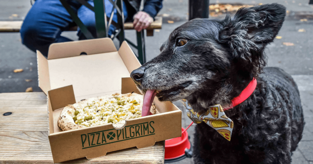 Pooches Get a 'Pizza' The Action At Dog-Friendly Pizza Pilgrims