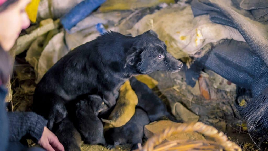 Faith The Romanian Street Dog Looking For Love With Puppies