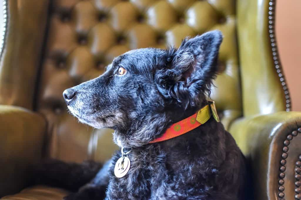 Dog-Friendly Pubs Infographic | How Dog-Friendly Are The UK's Pubs? 4