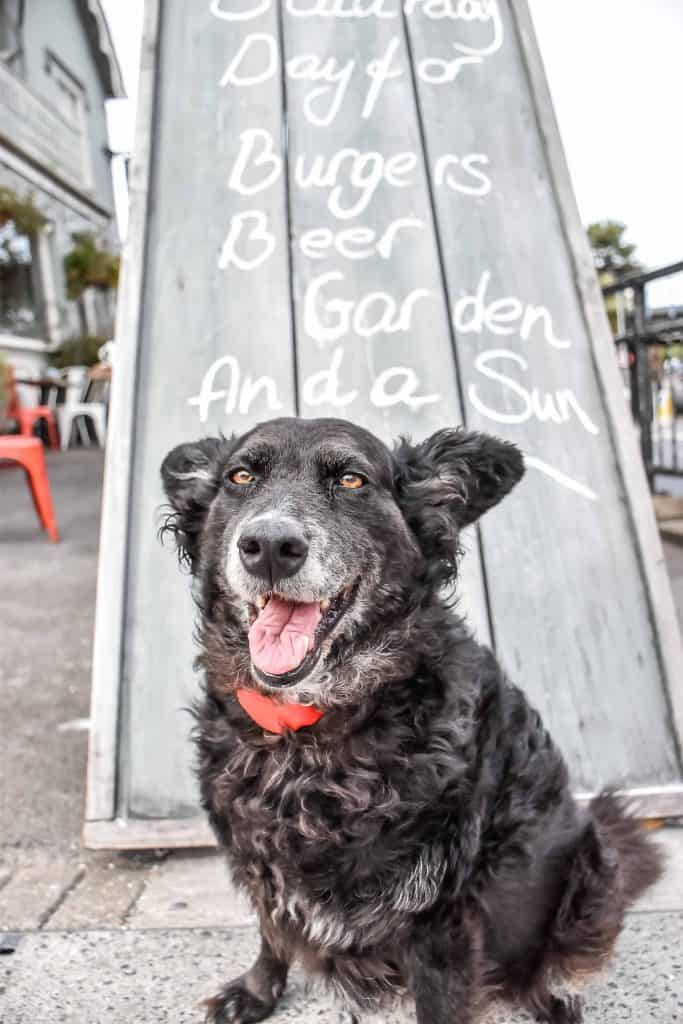 Dog-Friendly Pubs Infographic | How Dog-Friendly Are The UK's Pubs? 3