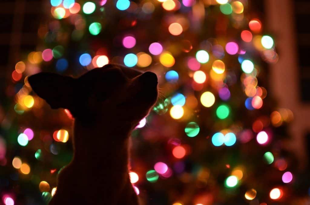 December 2017 Events Agenda For London Dogs -Santa Paws Brunch