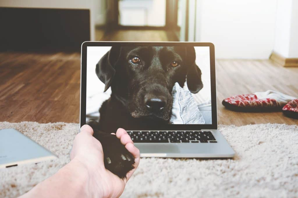 Gift Guide | 5 Pet Tech Gifts You Need For Your Dog