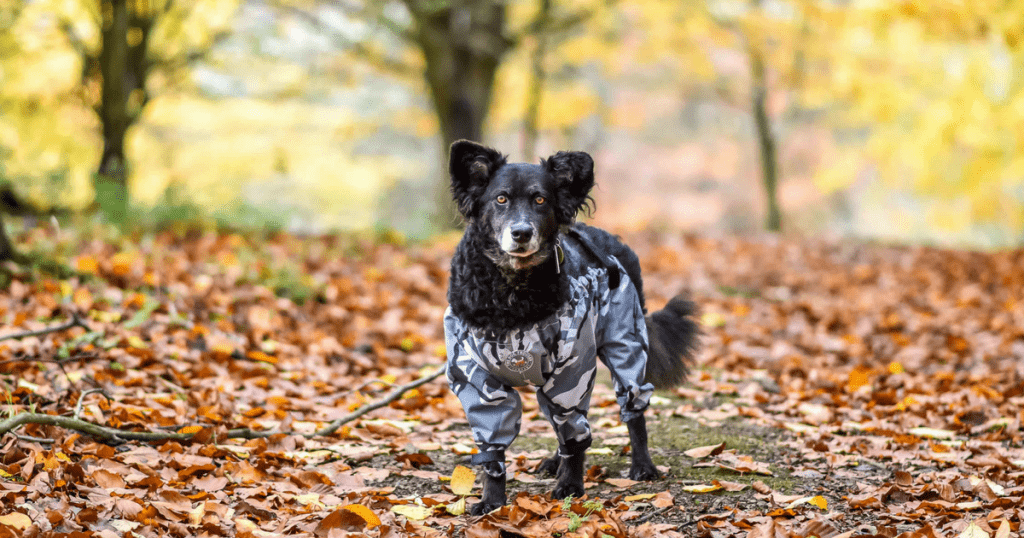 Dog Trousers Review | Do They Keep Your Dog Clean?